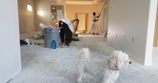 renovation and a dog